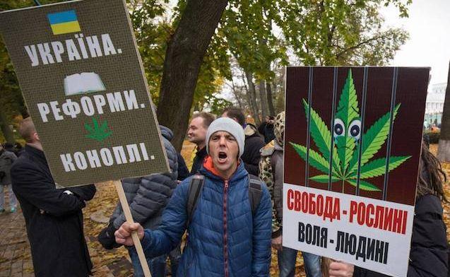 Новости легализации конопли можно ли выращивать марихуану дома в россии