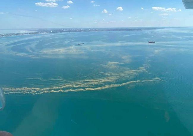 Море у Одессы из-за небывалой жары стало зеленым и густым как ...